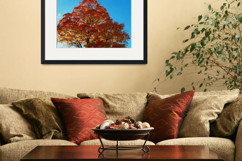"""Autumn Maple Blaze&quot  (2012) by bavosiphotoart"