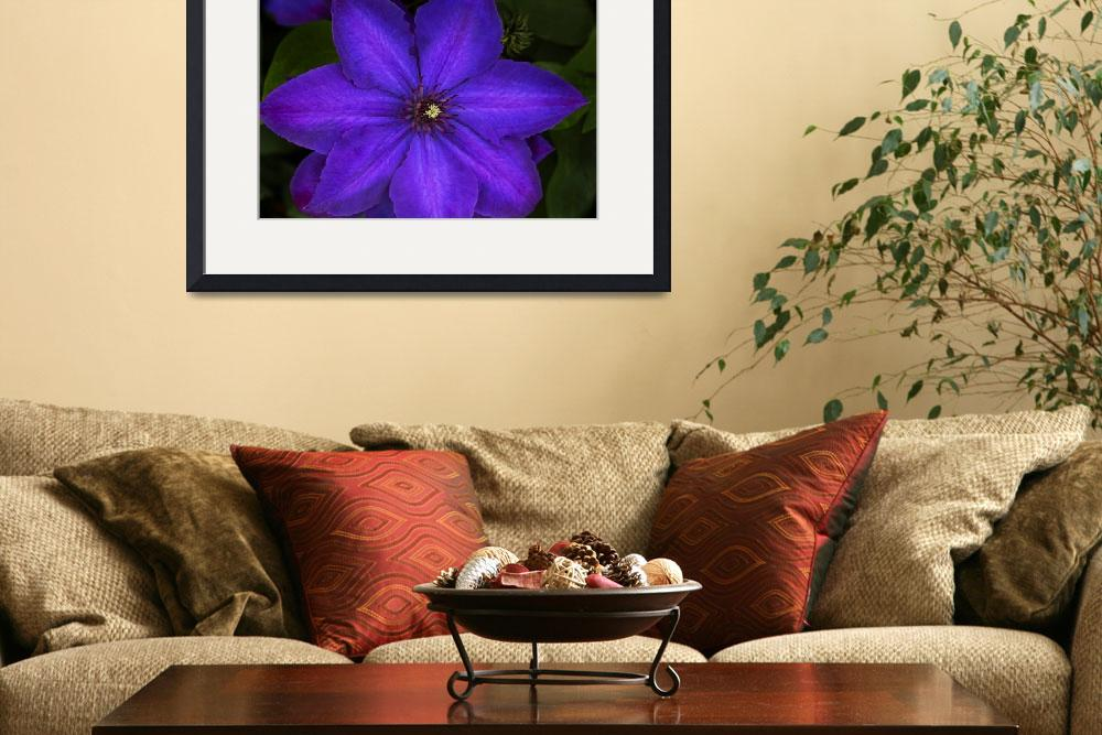 """Purple Clematis Flower&quot  (2014) by SoulfulPhotos"