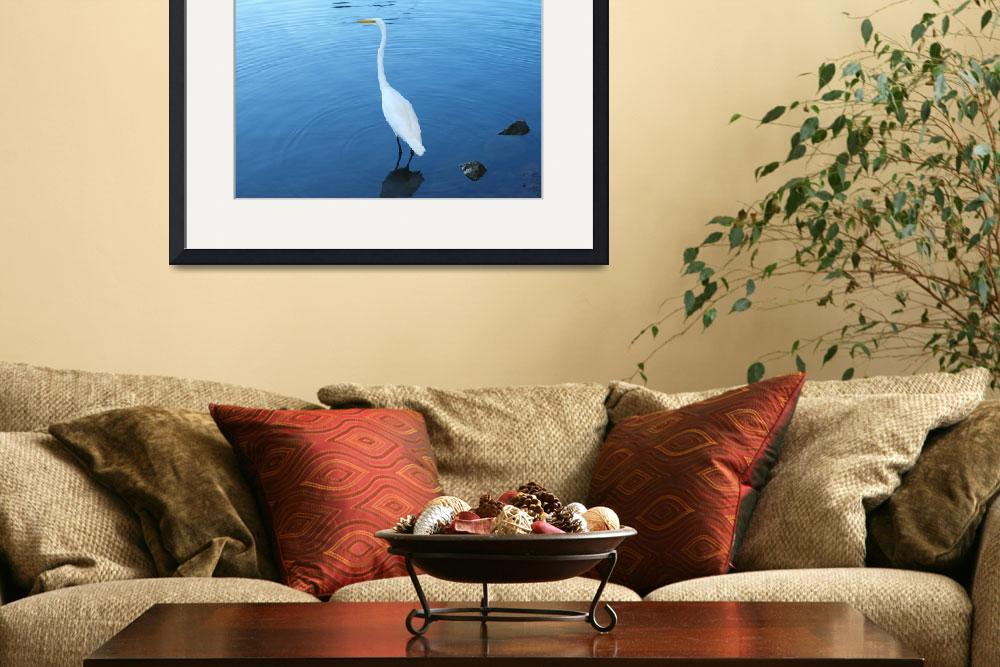 """Poignant Lake Anza Swan&quot  (2012) by photoartful"