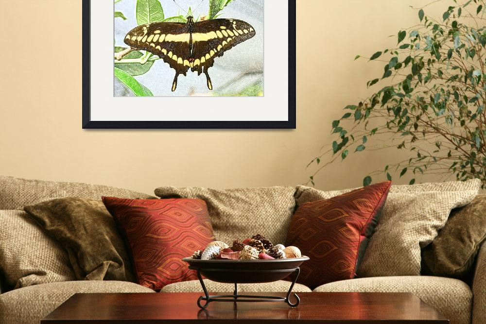 """Brown and Yellow Butterfly on a Plant&quot  (2015) by rhamm"