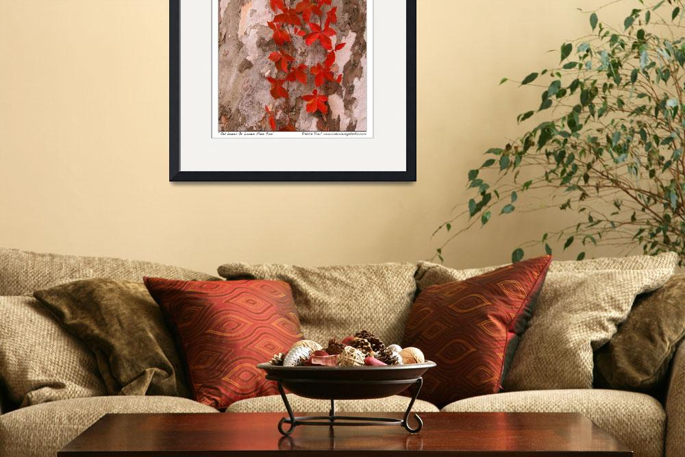 """Red Leaves On London Plane Tree&quot  by ravenswingstudio"