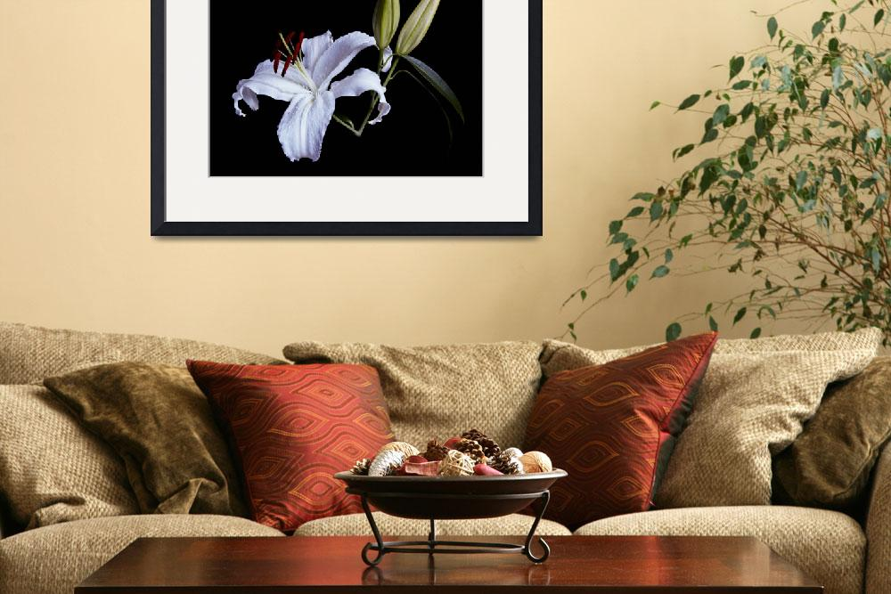 """White Lily&quot  (2007) by ToddMortonPhotography"