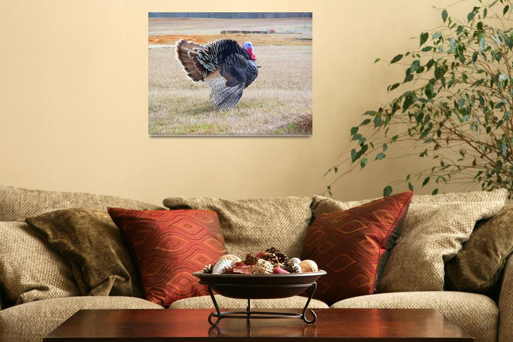 """The Grand Gobbler 041&quot  (2008) by photographybydonna"