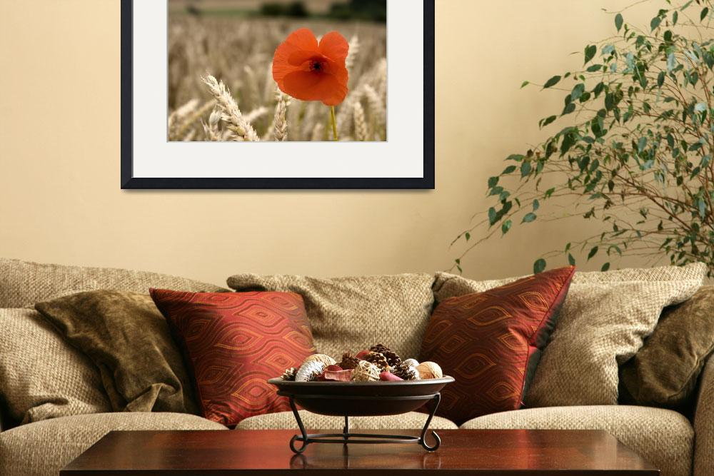 """Red Flower In Field&quot  by DesignPics"