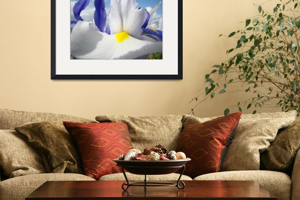 """Irises Iris Flowers Art 15 White Flowers Purple&quot  (2009) by BasleeTroutman"