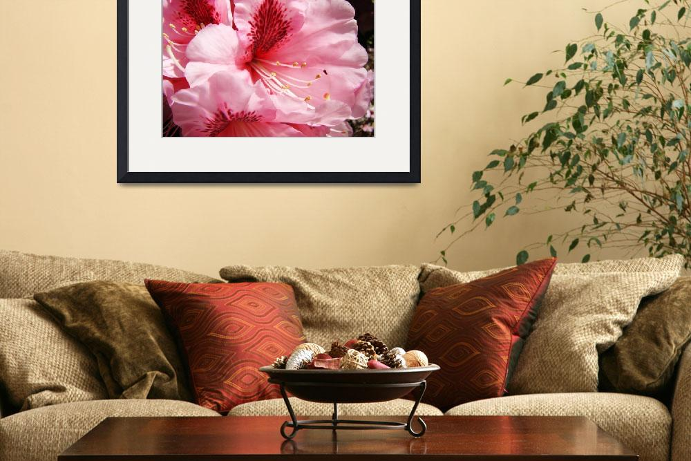 """Bright Colorful Pink Rhododendron Flowers art&quot  (2011) by BasleeTroutman"