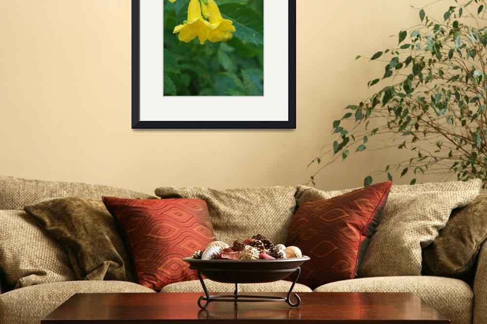 """Yellow trumpet flower&quot  by ashlie_conway"