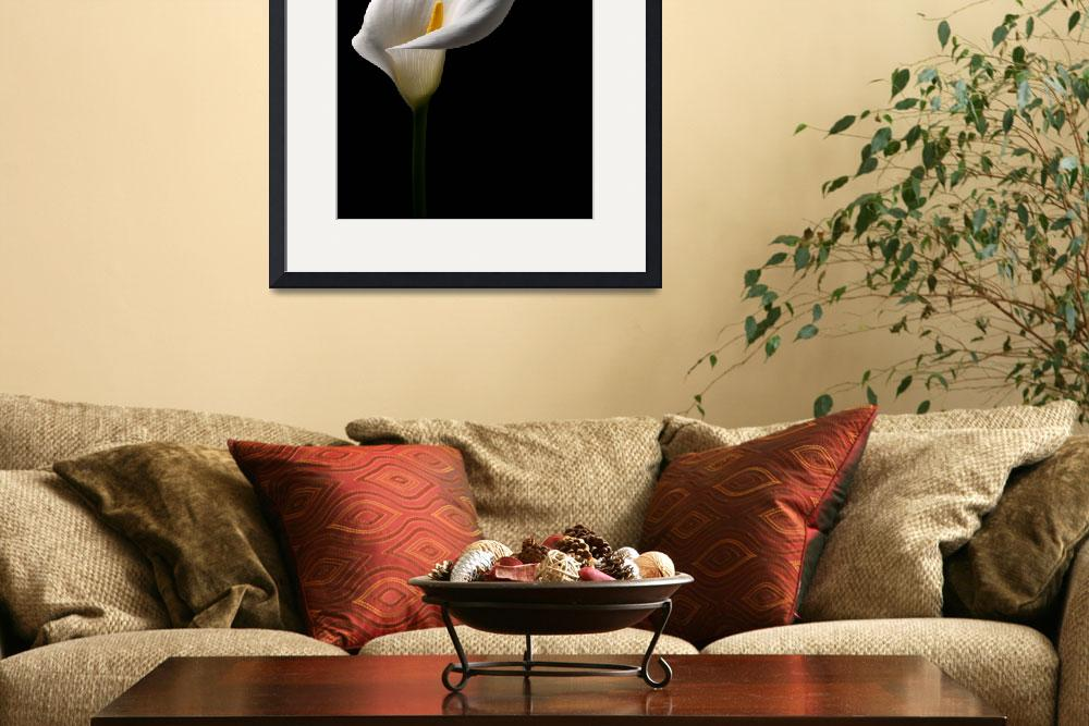 """Arum Lily&quot  (2009) by roger"
