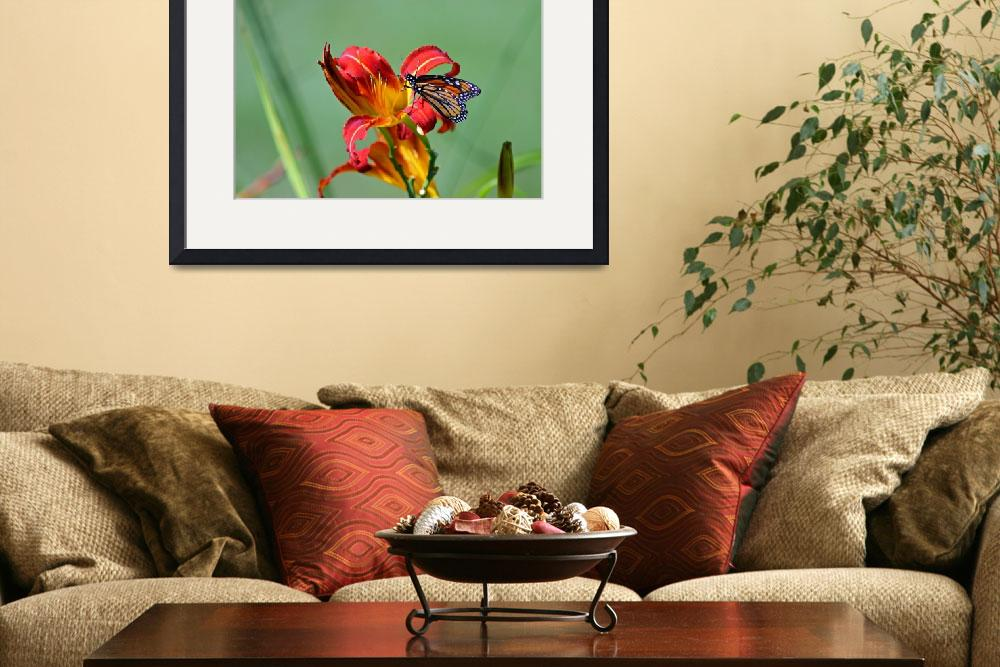 """Butterfly Monarch on Daylily&quot  (2012) by KsWorldArt"