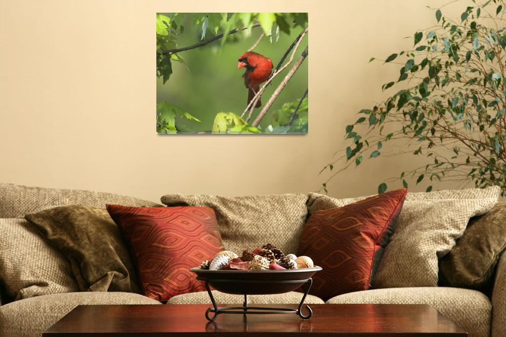 """Northern Cardinal Watching from the Tree Limb&quot  by tricia"