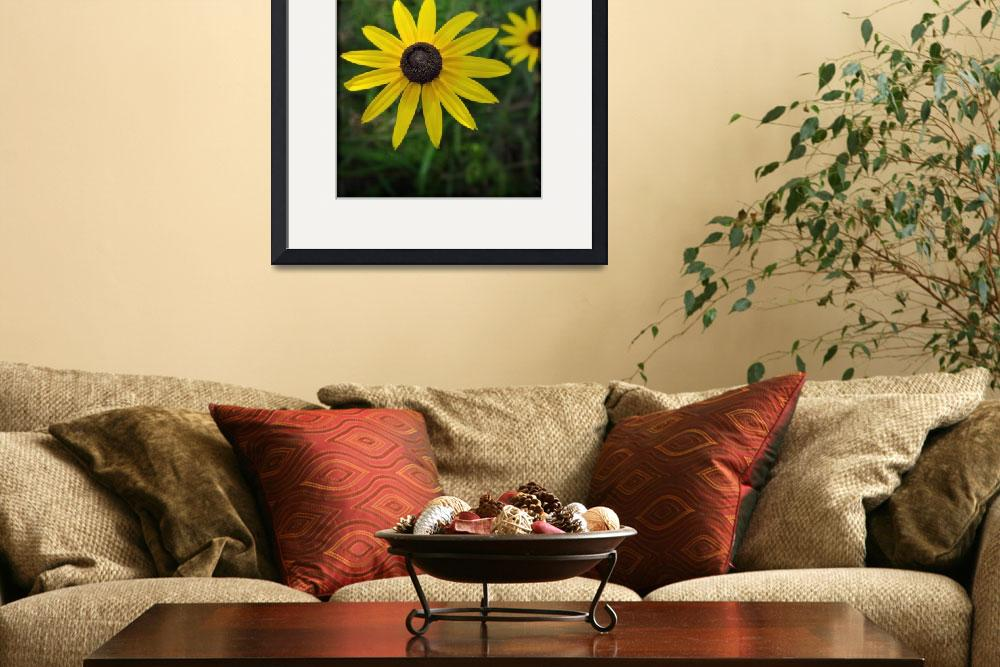 """Black Eyed Susan&quot  (2011) by adifferenteyephotography"