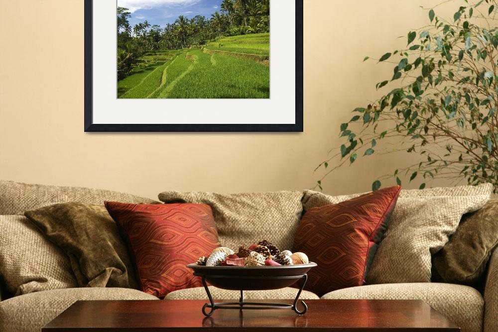 """Indonesia, Bali, Rice Terraces&quot  by DesignPics"