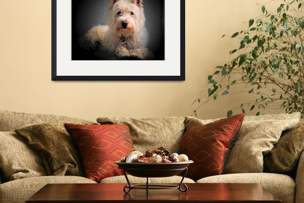 """Princess Phoebe - West Highland White Terrier&quot  by artsandi"