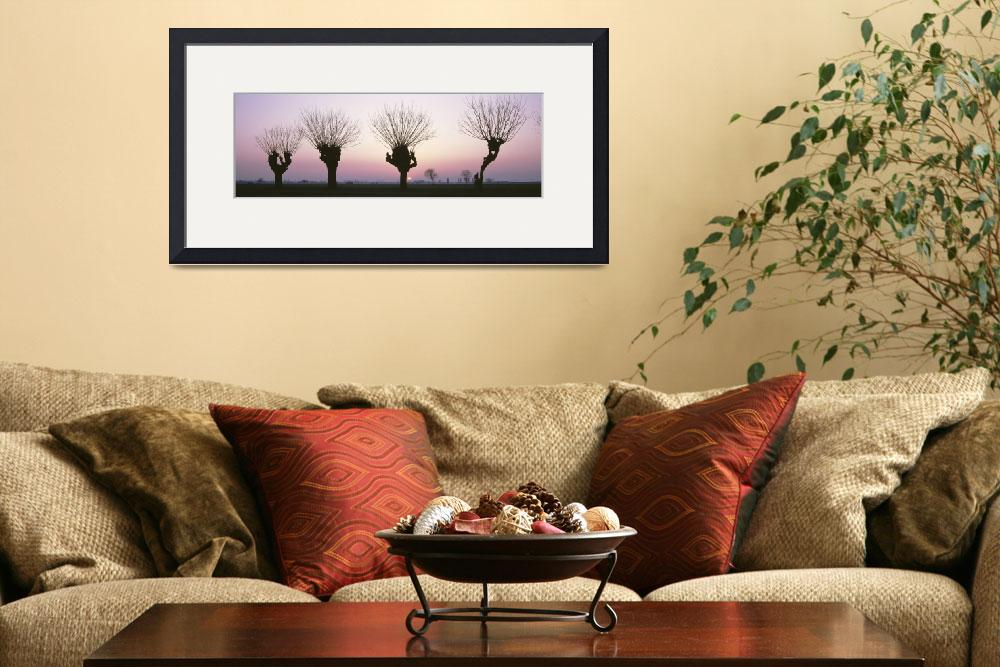 """Barren Willows at Sunset Italy&quot  by Panoramic_Images"