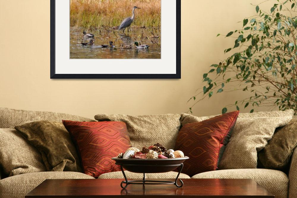 """Ducks and Blue Heron New Durham NH&quot  (2012) by bavosiphotoart"