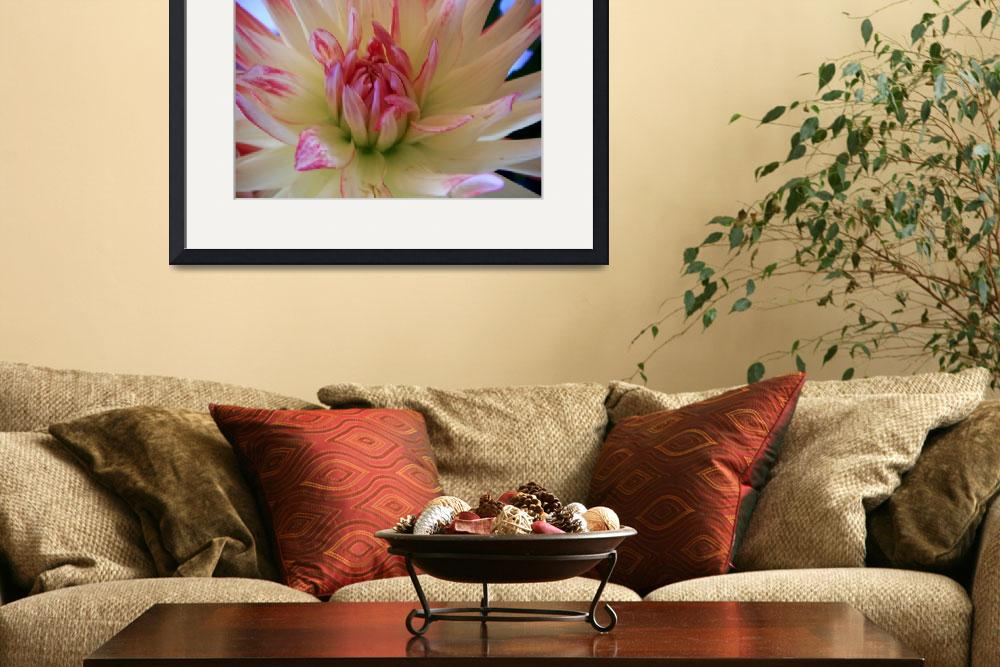 """White Dahlia with pink marking&quot  by Alexa"