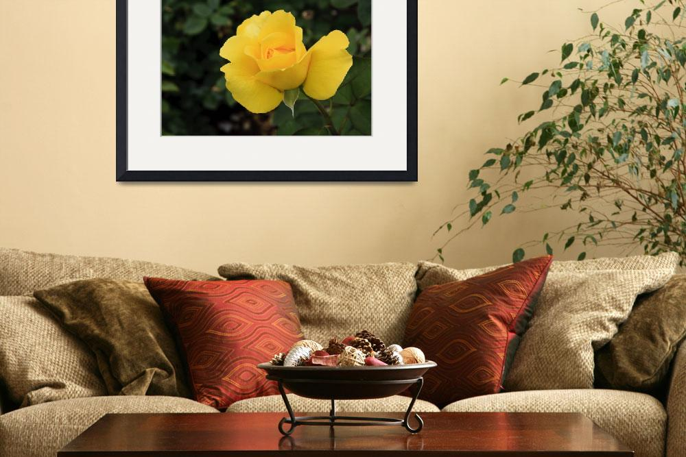 """Single yellow rose&quot  (2010) by SueLeonard"