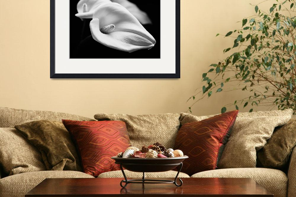 """Calla Lilies 4, Floral Still Life&quot  by Aldo"
