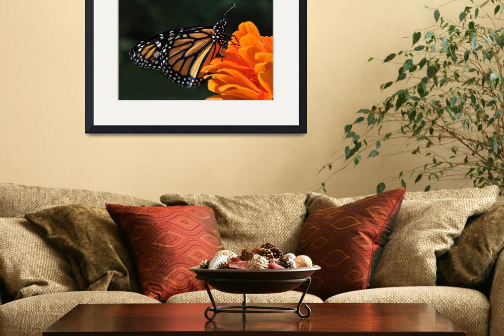 """Monarch and Orange Zinnia No2&quot  (2010) by evansonart"
