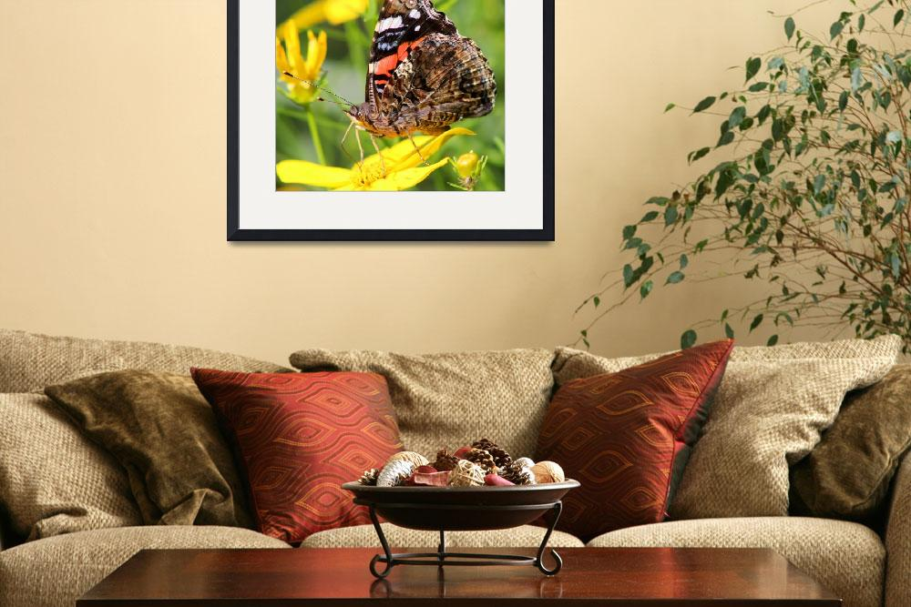 """Red Admiral Butterfly square&quot  (2014) by KsWorldArt"