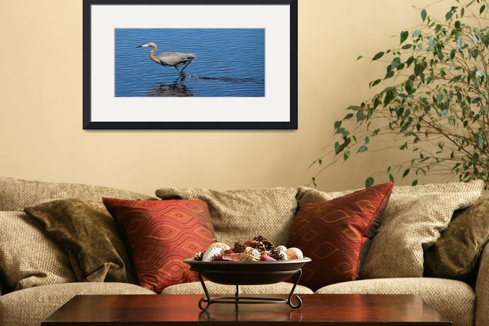 """Reddish Egret&quot  (2013) by ValeriesGallery"