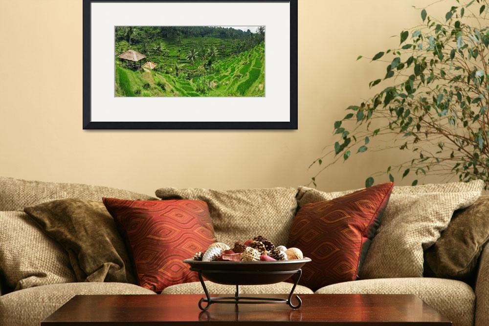 """Bali Rice Terraces&quot  by flyingpanther"