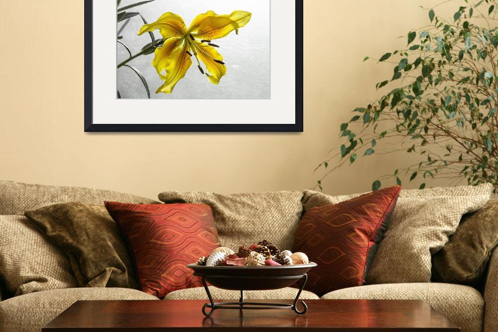 """The Yellow Lily&quot  (2014) by mgarrido"