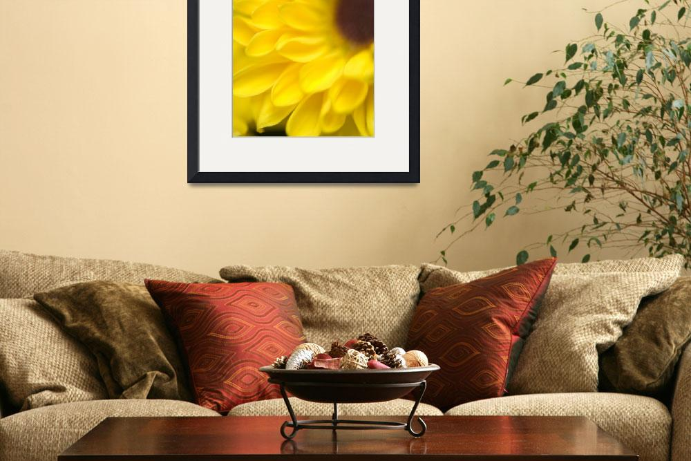 """Yellow Flower&quot  (2008) by robophoto"
