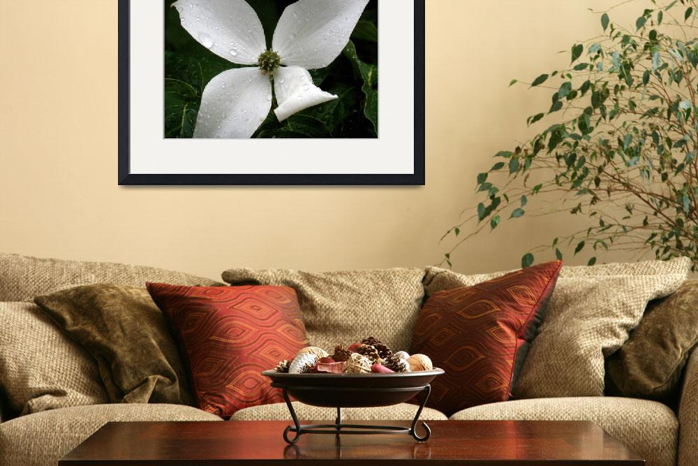 """Dogwood bloom&quot  (2010) by kellyspictures"
