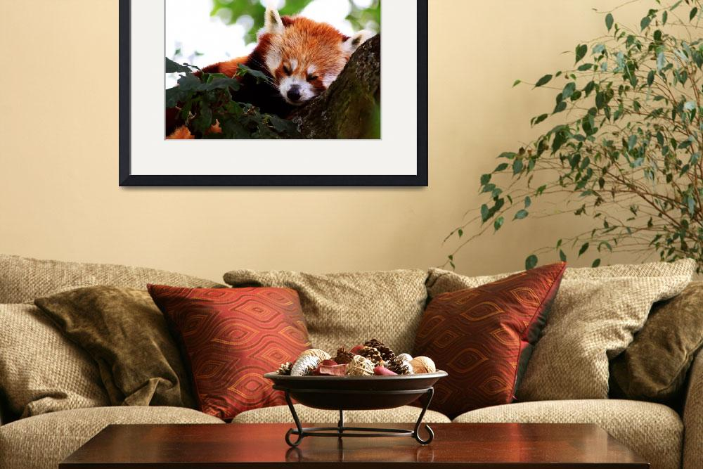 """Red Panda&quot  (2011) by ianjeffrey"