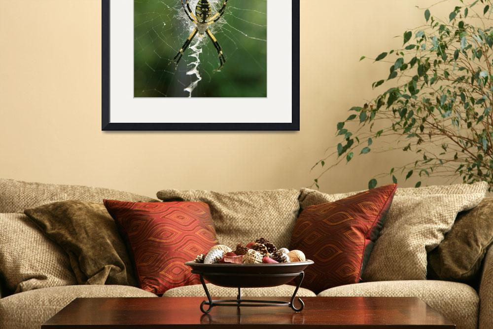 """Black and Yellow Argiope Img 0829&quot  (2012) by rayjacque"