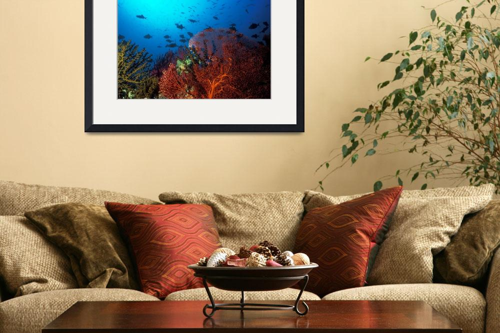 """Coral reef scene, Solomon Islands (#0025764)&quot  (2004) by Triggerfish_Images"