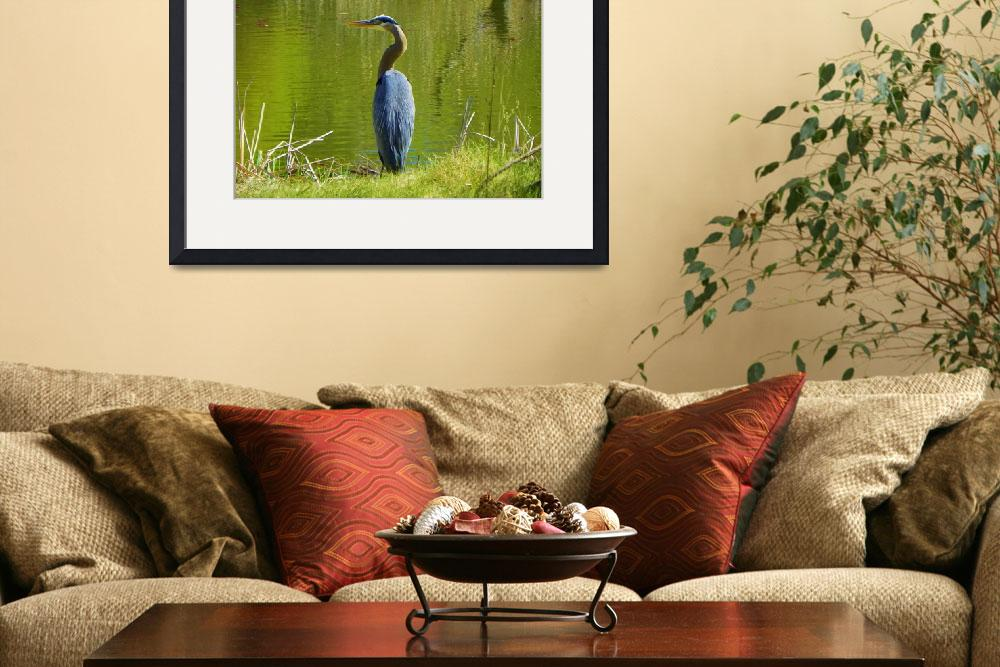 """Great Blue Heron - Ardea Herodias&quot  by artsandi"