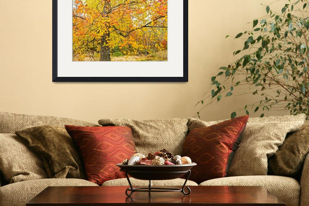 """Maple Tree Adorned in Autumn Foliage&quot  (2015) by MotherNature1"
