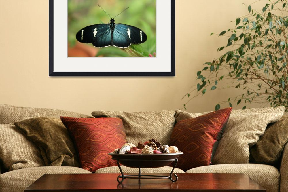 """Blue Butterfly on a Leaf&quot  (2013) by rhamm"