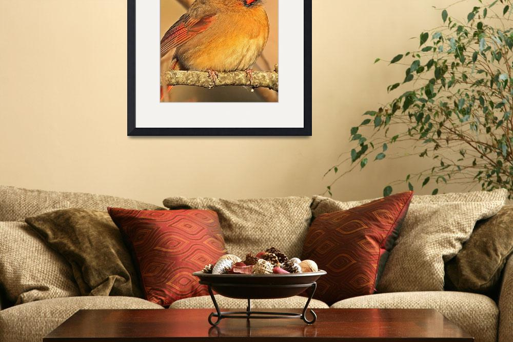 """Northern Cardinal (female)&quot  (2010) by shelshots"