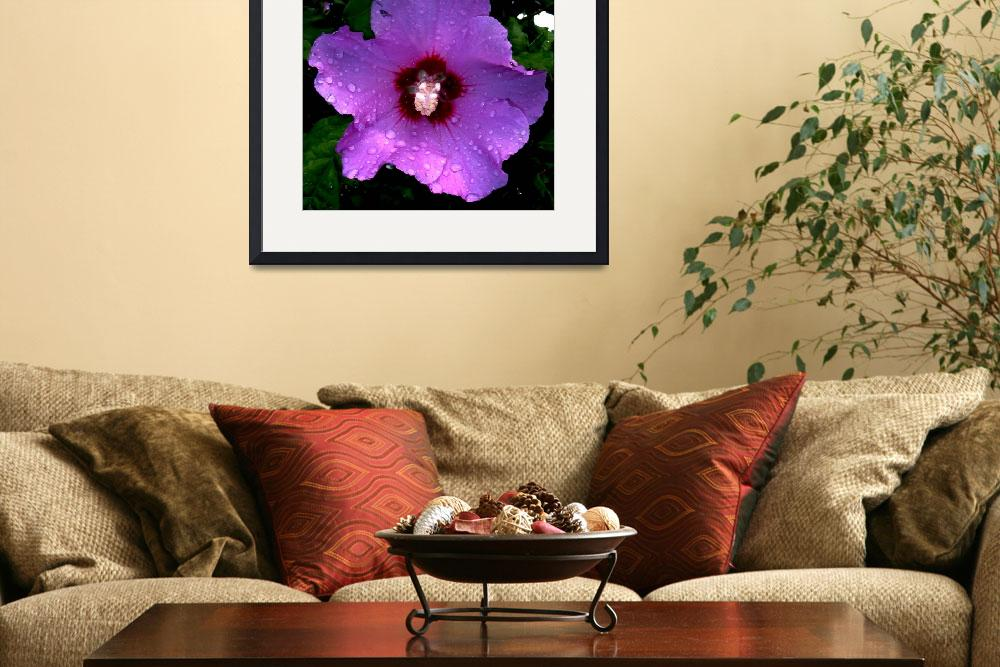 """Rose of Sharon&quot  (2008) by bavosiphotoart"