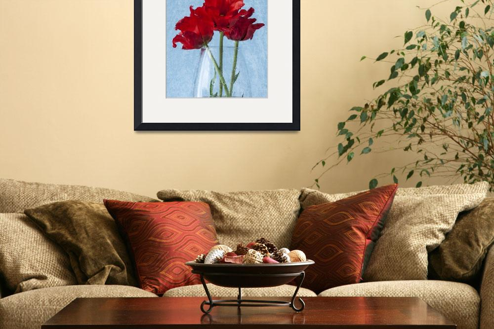 """Red Tulip&quot  by StevePurnell"