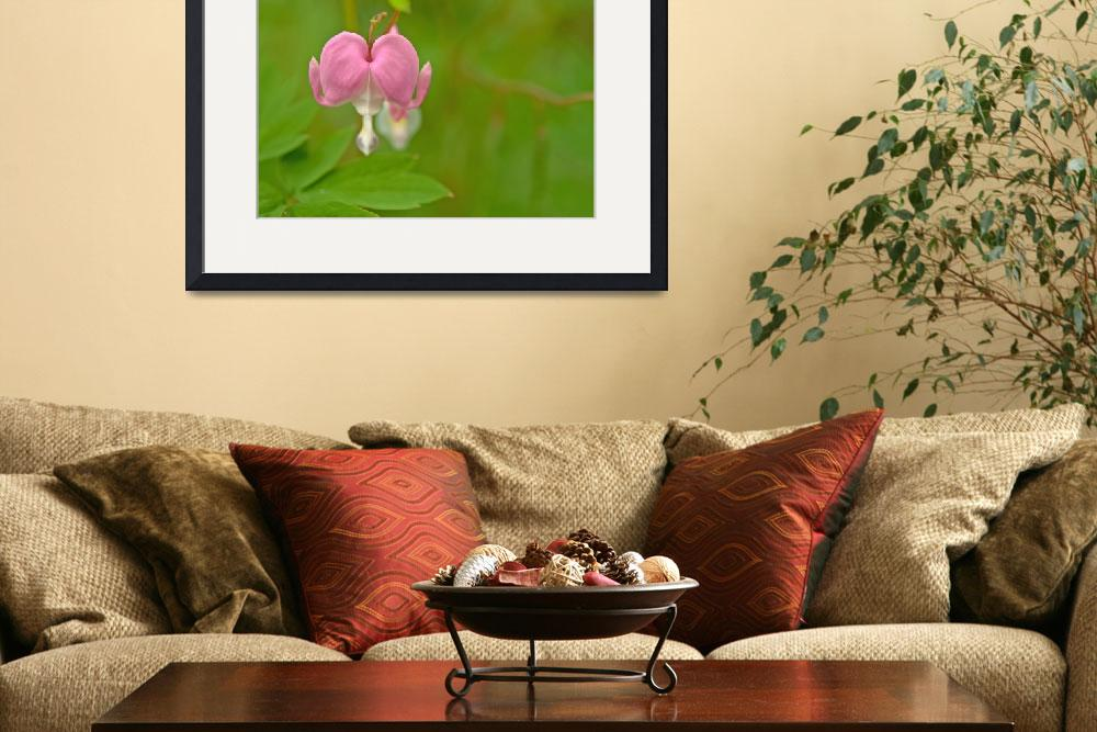 """Bleeding Heart&quot  by LJS"