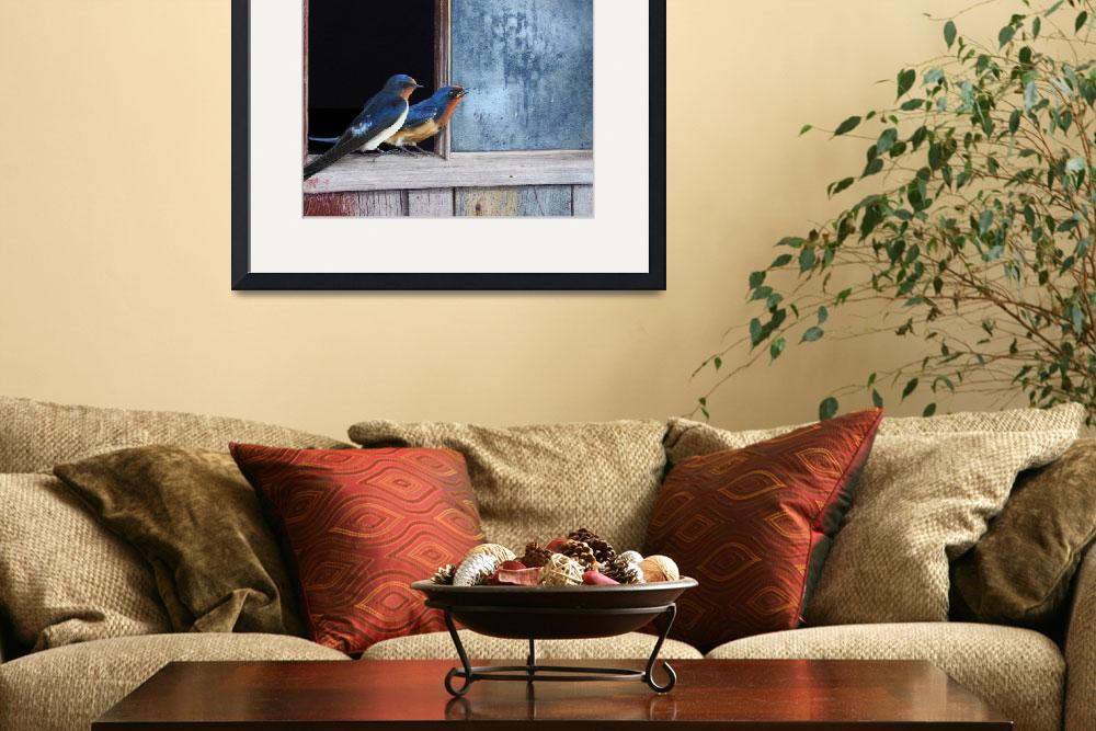 """blue window - barn swallows&quot  (2011) by rchristophervest"
