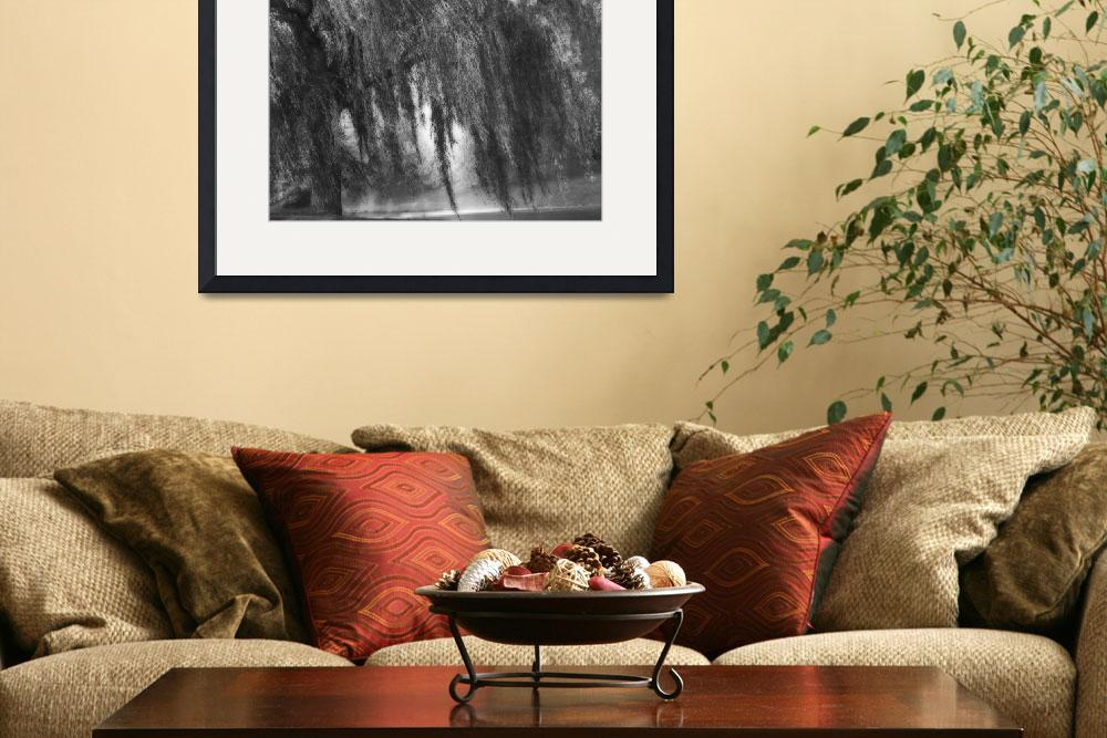 """B&W Weeping Willow Tree Landscape Nature Scene&quot  (2008) by PhotographsByCarolFAustin"