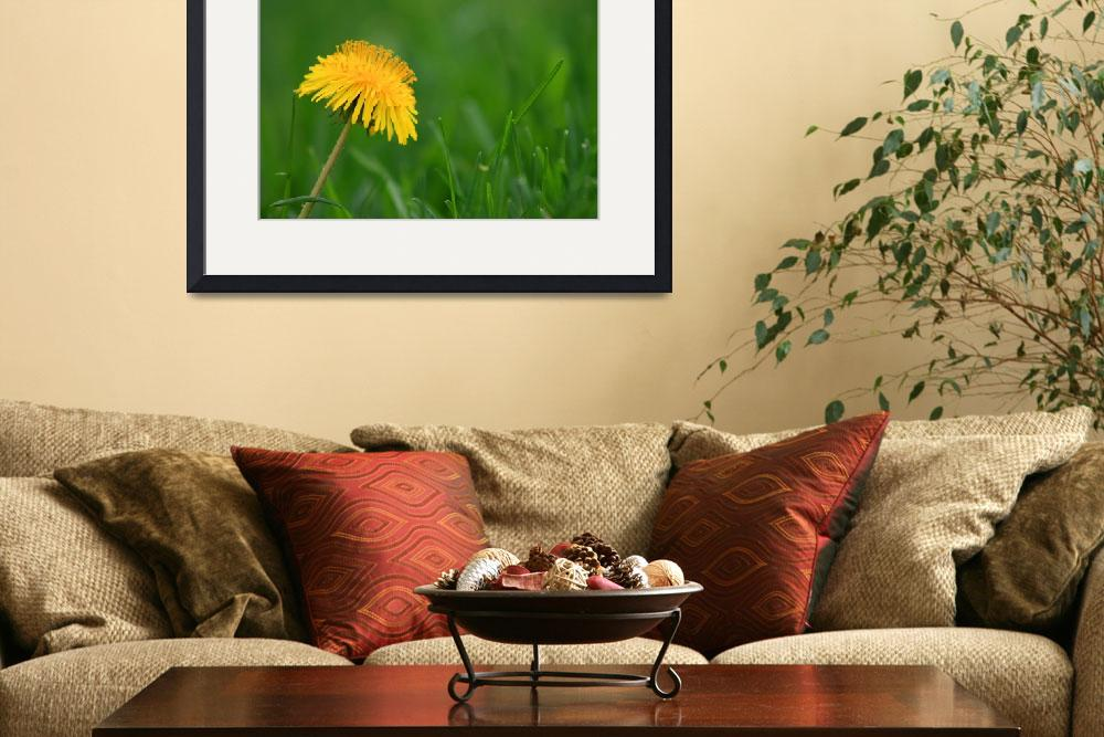 """Dandelion Flower&quot  (2013) by KsWorldArt"