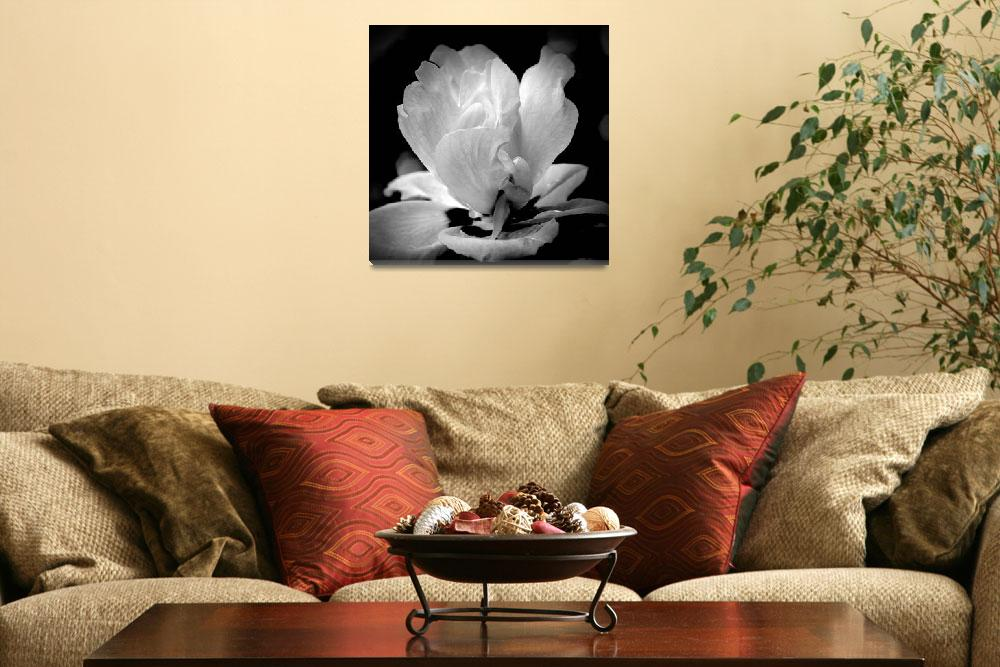 """Blossom In Black and White&quot  (2012) by bavosiphotoart"