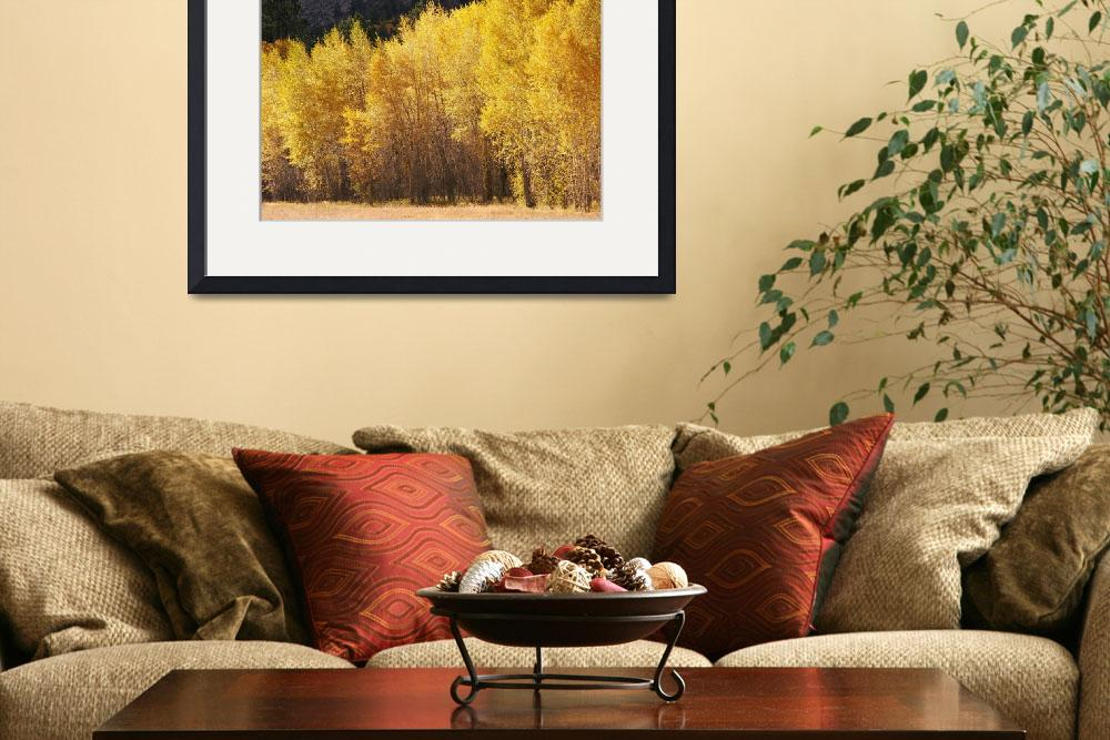 """Aspen trees, near St. Elmo Colorado&quot  by alcaporaso"