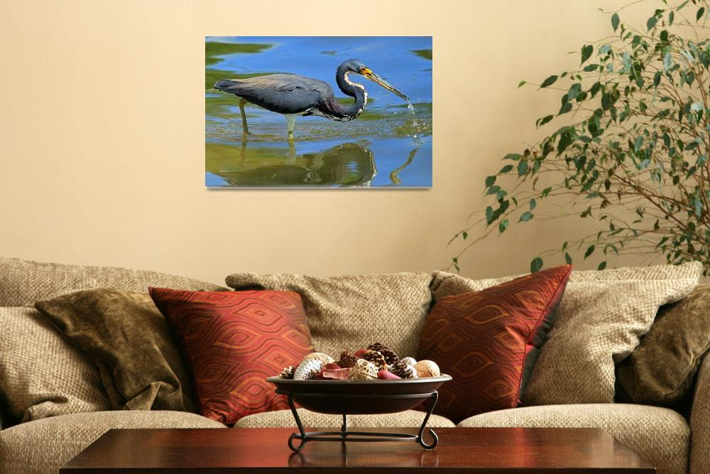 """Tricolored Heron&quot  (2011) by shelshots"