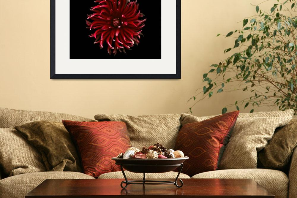 """Red Spider Dahlia&quot  (2008) by OGphoto"