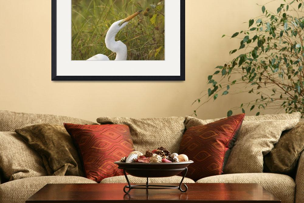 """Young Egret&quot  (2003) by PaulDRobertson"