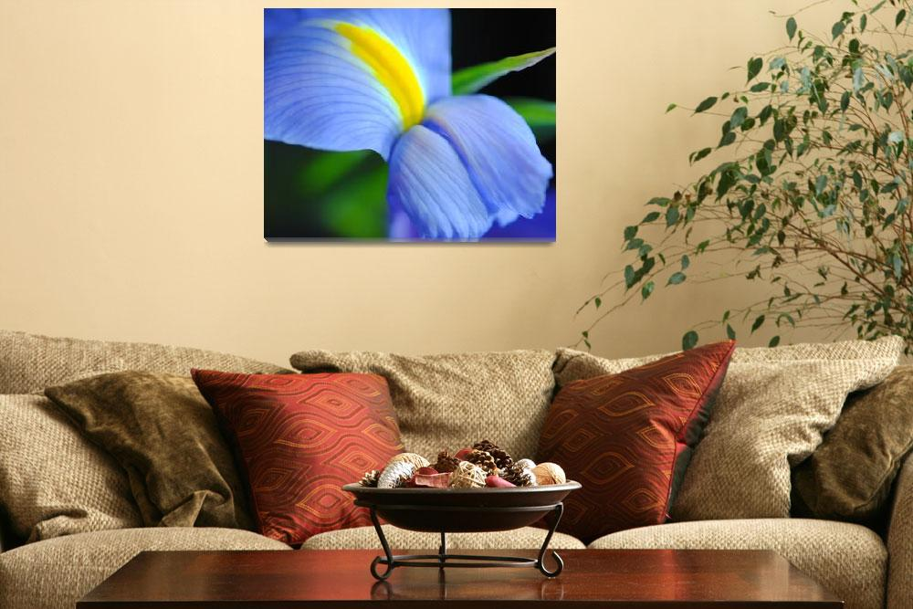 """Purple and Yellow Iris 16x20&quot  by bloomingvinedesign"