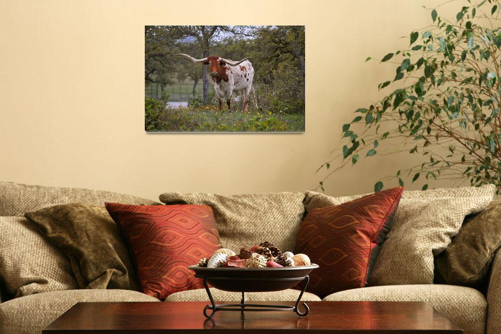 """Red and White Texas Longhorn Steer&quot  (2015) by judimage"