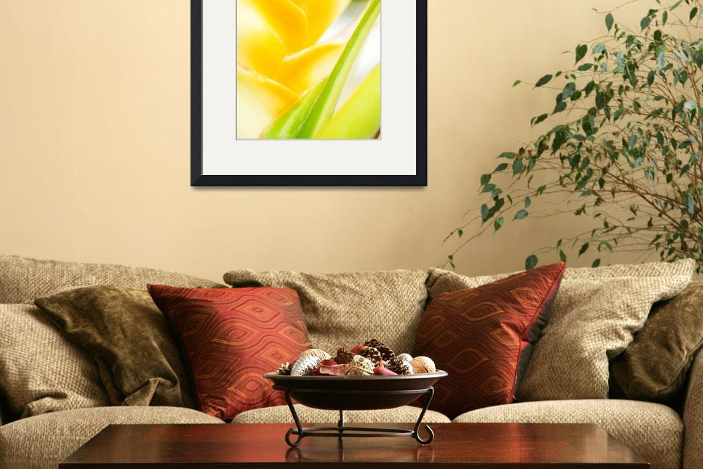 """Hawaii, Oahu, Close-Up Of Heliconia Plant&quot  by DesignPics"